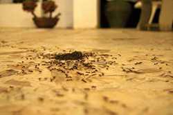 Полезные советы: как избавиться от муравьев